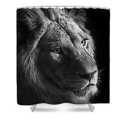 Young Lion In Black And White Shower Curtain by Lukas Holas