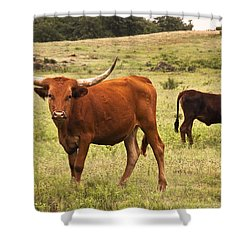 Young Longhorn Shower Curtain by Tamyra Ayles