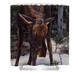 Young Moose And Pussy Willows Springtime In Alaska Wildlife Painting Shower Curtain