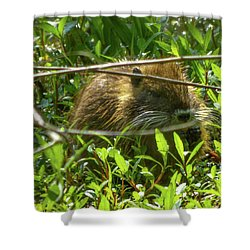 Young Nutria In Love Shower Curtain by Kimo Fernandez
