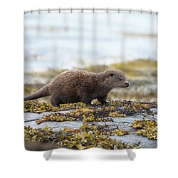 Young Otter Shower Curtain