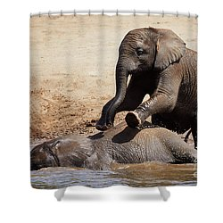 Shower Curtain featuring the photograph Young Playful African Elephants by Nick Biemans