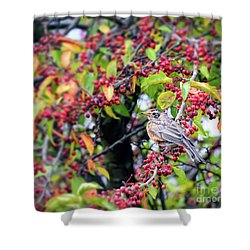 Shower Curtain featuring the photograph Young Robin In The Berries by Kerri Farley
