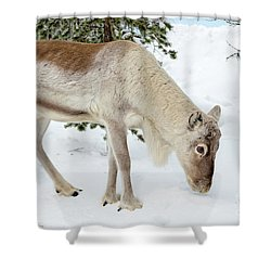Shower Curtain featuring the photograph Young Rudolf by Delphimages Photo Creations