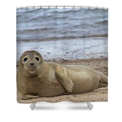Young Seal Pup On Beach - Horsey, Norfolk, Uk Shower Curtain by Gordon Auld