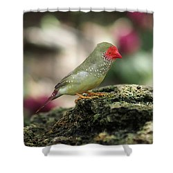 Young Star Finch Shower Curtain