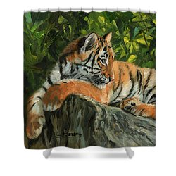 Shower Curtain featuring the painting Young Tiger Resting On Rock by David Stribbling
