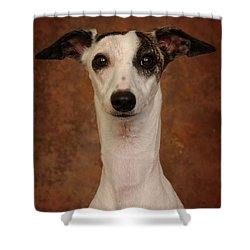 Young Whippet Shower Curtain by Greg Mimbs