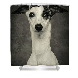 Young Whippet In Black And White Shower Curtain by Greg and Chrystal Mimbs