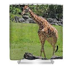 Youthful Shower Curtain