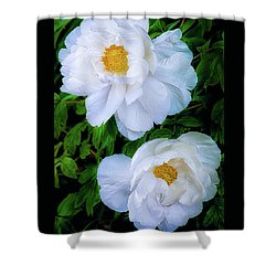 Yu Ban Bai Chinese Tree Peonies Shower Curtain by Julie Palencia