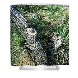 Shower Curtain featuring the photograph Yucca Cactus On The Arizona Desert by Merton Allen