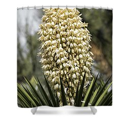 Shower Curtain featuring the photograph Yucca Flowers In Bloom  by Saija Lehtonen