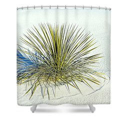Yucca In White Sand Shower Curtain