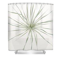 Yucca Whorl Shower Curtain