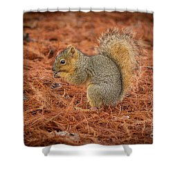 Yum Yum Nuts Wildlife Photography By Kaylyn Franks     Shower Curtain