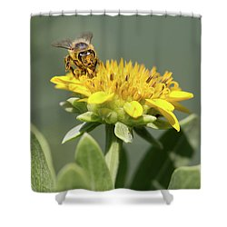 Yumm Pollen Shower Curtain by Christopher L Thomley