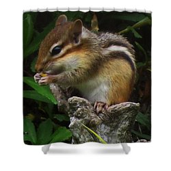 Yummy Shower Curtain by Doug Norkum