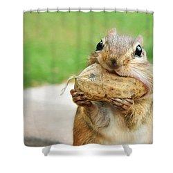 Yummy Shower Curtain by Lori Deiter
