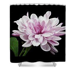 Shower Curtain featuring the photograph Yummy Mummy by Terence Davis