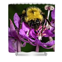 Shower Curtain featuring the photograph Yummy Pollen by Darcy Michaelchuk
