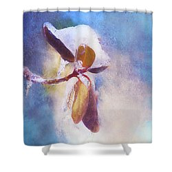 Winter Abstract - Snow And Ice On Rhododendron Leaves Shower Curtain