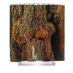 Z Z In A Tree Shower Curtain