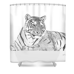 Zarina A Siberian Tiger Shower Curtain by Patricia Hiltz