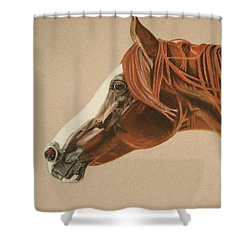 Zarro Shower Curtain by Melita Safran