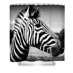 Zebra 2 Shower Curtain by Perry Webster
