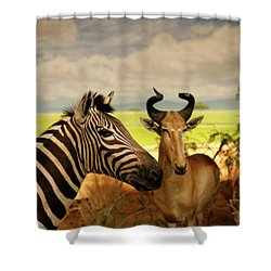 Zebra And Antelope Shower Curtain by Marilyn Hunt