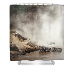 Zebra And Wildebeest Migration In Africa Shower Curtain