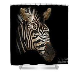 Zebra Shower Curtain by Barbara Dudzinska