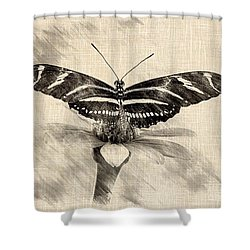 Zebra Butterfly Sketch Shower Curtain