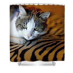 Zebra Cat Shower Curtain