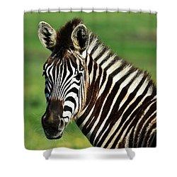 Zebra Close Up Shower Curtain