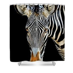 Zebra Shower Curtain by Dave Mills