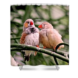 Shower Curtain featuring the photograph Zebra Finch Colloquy by Rona Black