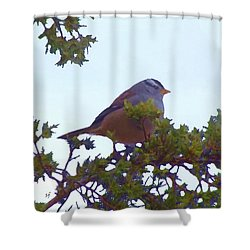 Shower Curtain featuring the digital art White Crowned Sparrow In Cedar by Shelli Fitzpatrick