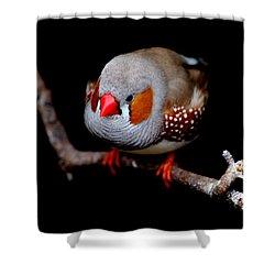 Zebra Finch Shower Curtain