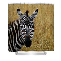 Zebra Half Shot Face On Shower Curtain