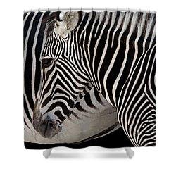 Zebra Head Shower Curtain by Carlos Caetano