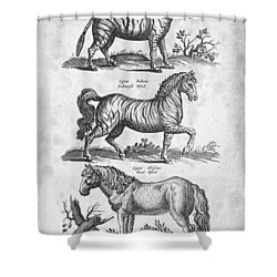 Zebra Historiae Naturalis 1657 Shower Curtain