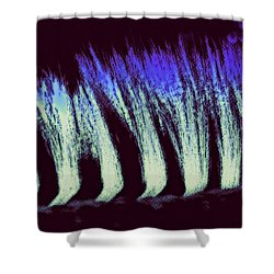 Zebra II Shower Curtain