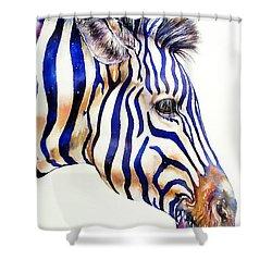 Zebra In Blue Shower Curtain