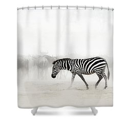 Zebra In Dust Of Africa Shower Curtain