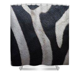 Zebra Shower Curtain by Linda Geiger
