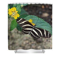 Shower Curtain featuring the photograph Zebra Longwing Butterfly - 1 by Paul Gulliver