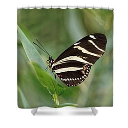 Shower Curtain featuring the photograph Zebra Longwing Butterfly - 2 by Paul Gulliver
