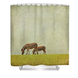 Zebra Shower Curtain by Lyn Randle